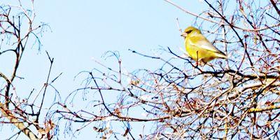 aves del pirineo