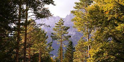 arboles y montaña