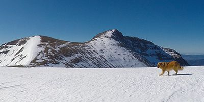 Mesola Semi invernal desde Lizara
