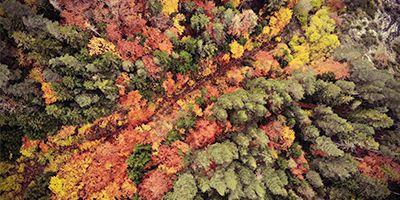 bosque otoño