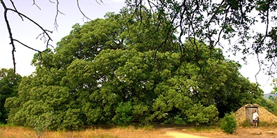 portada árboles singulares de aragon