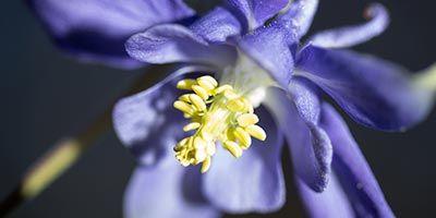 algunas flores del pirineo