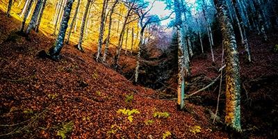 circular por el bosque de gamueta ansó