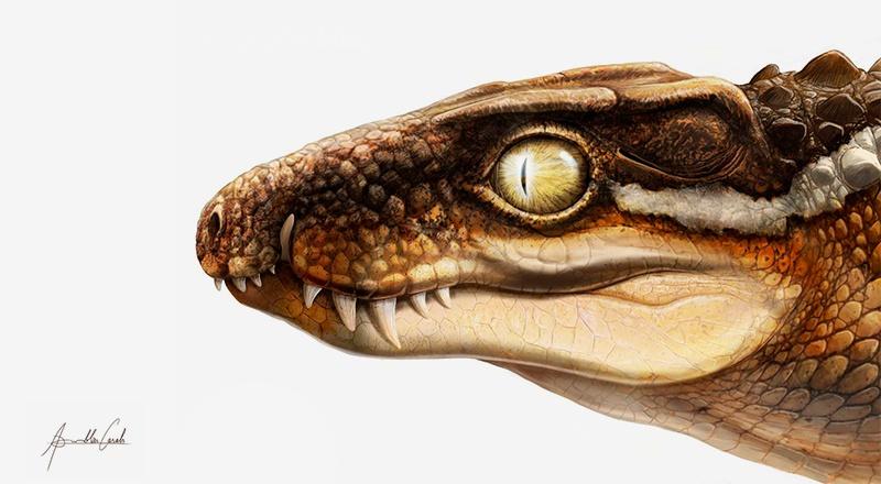 cocodrilo nueva especie descubierta pirineo fosil