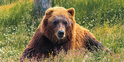 como actuar qué hacer ante la presencia de un oso