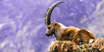 especies animales autoctonas del pirineo