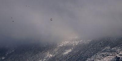 grullas nieve