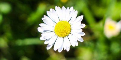 margarita flora