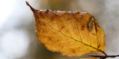 hojas del pirineo