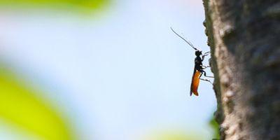 insectos del Pirineo