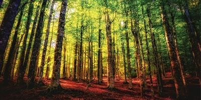 otoño por que hojas cambian de color