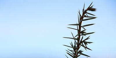 portada rama enebro chinebro