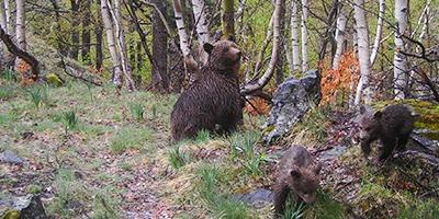portada visitas guiadas oso