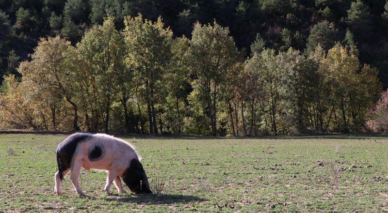 cerdo granja escuela riorcal